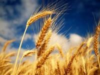 може да изнася 20 милиона тона зърно годишно, независимо от реколтата