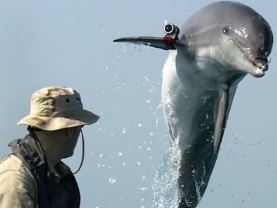 Кримските делфини стават килъри за 3 месеца