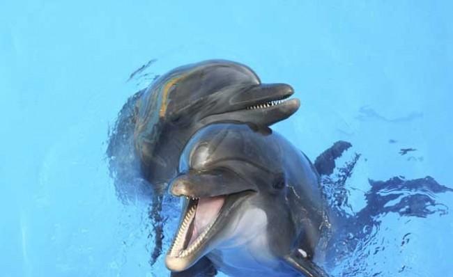 Русия може да залови и препрограмира бойните делфини на САЩ