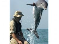 Бойни делфини на САЩ ще участват по време на ученията в Черно море