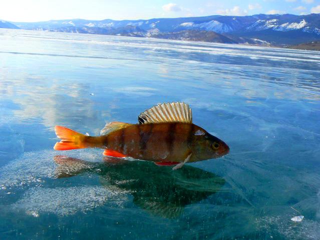 Съкровище на планетата: езерото Байкал
