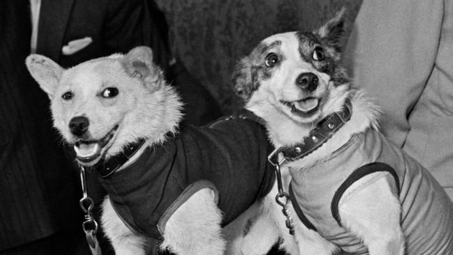 Белка и Стрелка – предшествениците на Гагарин