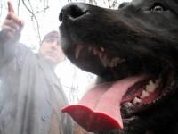 Две овчарки на Борисов на световно в Москва