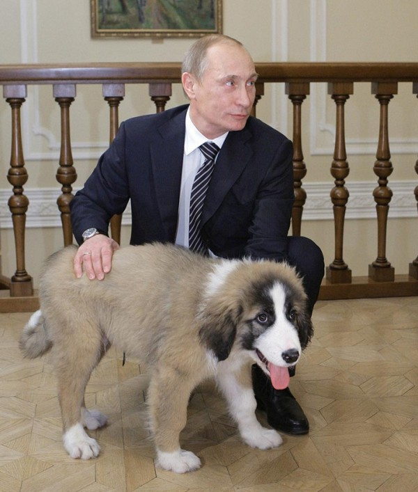 Russia's Prime Minister Putin plays with his Bulgarian shepherd dog named Buffy at the Novo-Ogaryovo residence outside Moscow