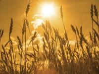 Русия ще наложи митнически такси, за да ограничи износа на зърно