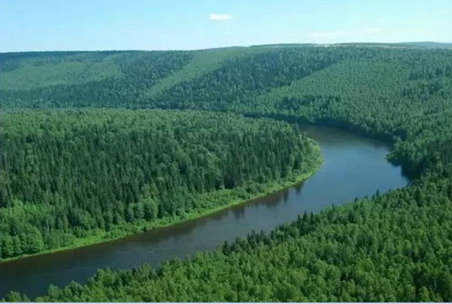 Тайгата в Русия