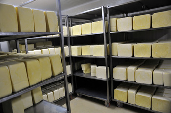 Задават се фалити в млечния сектор