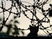 Киев обяви цена от 200 млн. евро за стената по границата с Русия