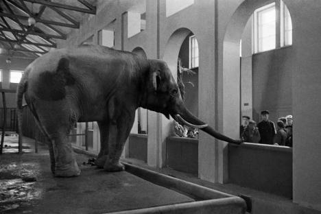 Как Московският зоопарк преживя Великата отечествена война