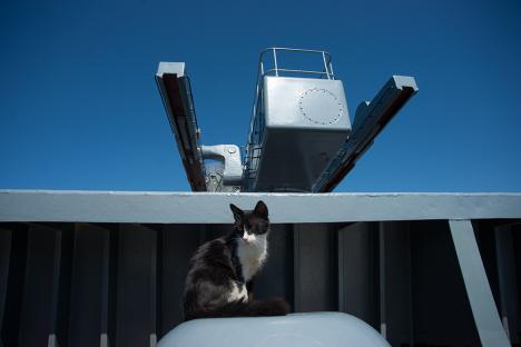 Топ-3 на животните в руския флот