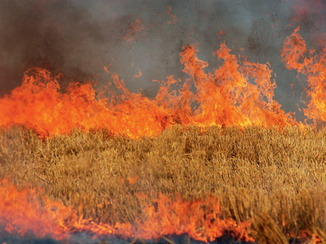 Пожари край Донецк унищожават реколтата в региона