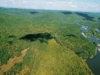 Еколози: Русия е на първо място по брой дървета