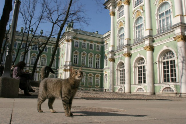 """270 години в Ермитажа: Как живеят музейните котки, """"възпитани"""" с Рембранд и Моцарт"""