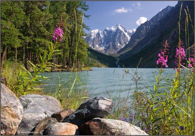 Нов вид стоножки в Алтайския биосферен резерват