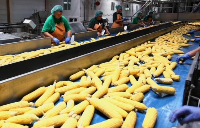 Русия може да забрани доставките на царевица от САЩ