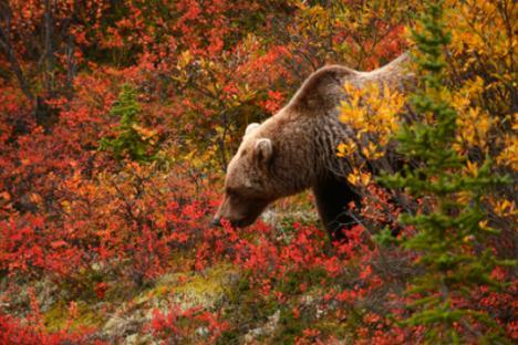 Дванайсетте най-опасни животни в Русия