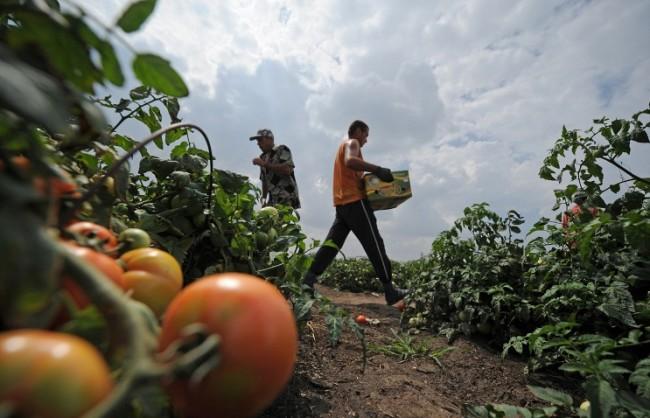 Медведев: Въвеждането на контрасанкциите се оказа изгодно за руските земеделски производители