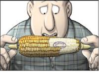 Русия забрани вноса на ГМО от САЩ