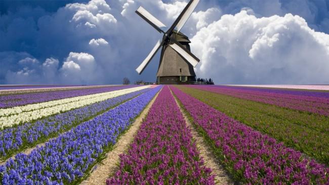 Холандските вятърни мелници смляха Порошенко