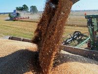 Bloomberg: Русия спечели повече от износ на храни, отколкото на оръжие
