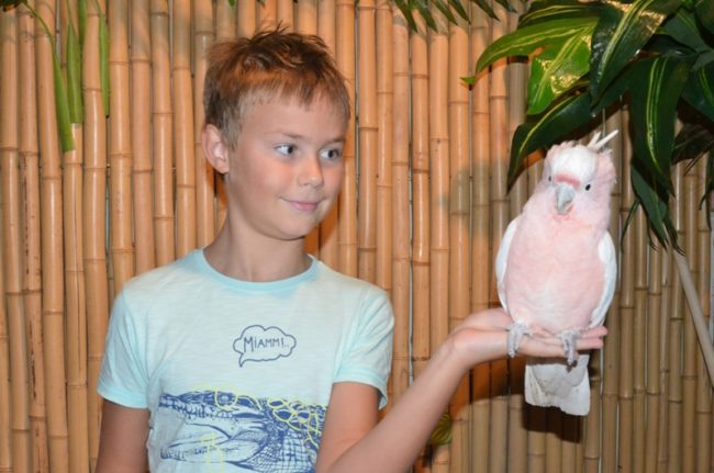 Най-голямата изложба за екзотични птици в Източна Европа в прегръдките на Плейграунд, Парадайс