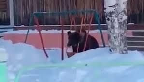 Как се забавляват мечките в Русия? (ВИДЕО)
