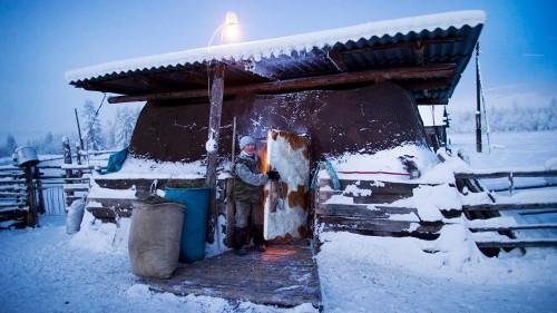 Николай Петрович залоства вратата на солидно изолирания обор на своите крави
