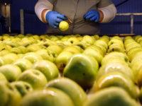 По думите на Нигматулин основни бенефициенти на плана за помощта ще станат компании в селскостопанския сектор. Снимка: Денис Абравом / ТАСС