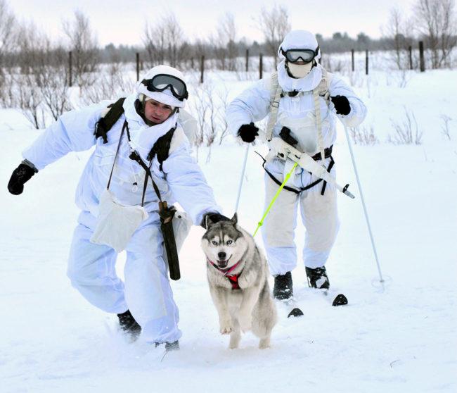 Полярни животни помагат за придвижването на руски войски по заледените земи