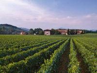 Италианци искат да правят бизнес в Донецк