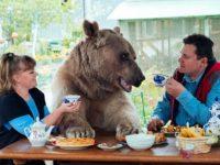Семейство осинови мече и живее с него повече от две десетилетия