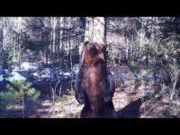Истинска радост: Мечок танцува и си чеше гърба в дърво (ВИДЕО)
