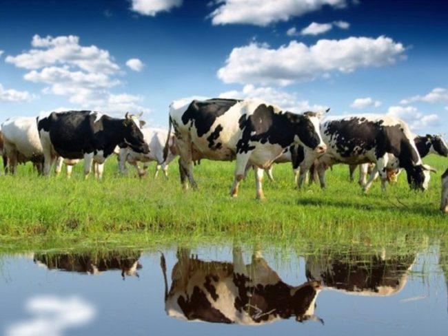 Френската фирма инвестира в селското стопанство в Русия заради руските контрасанкции
