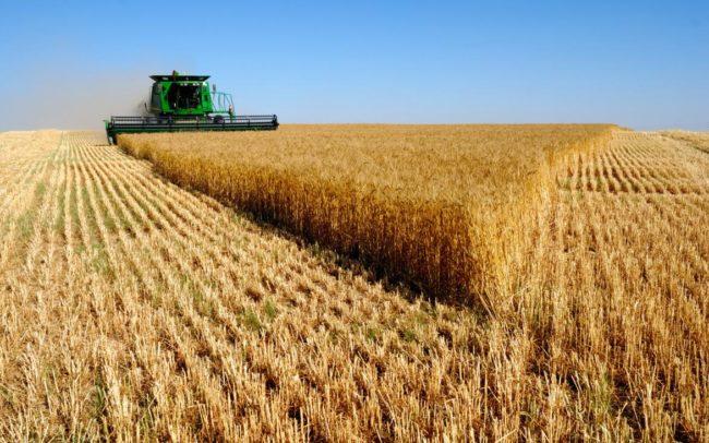 Русия подобри рекорда за добив на зърно на Съветския съюз