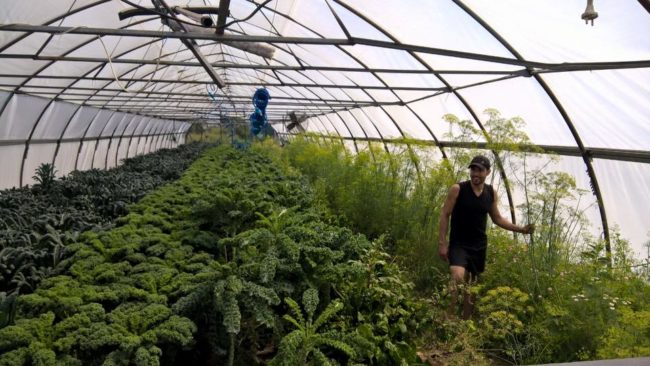 Как да си отворя ферма в Русия, ако съм българин?