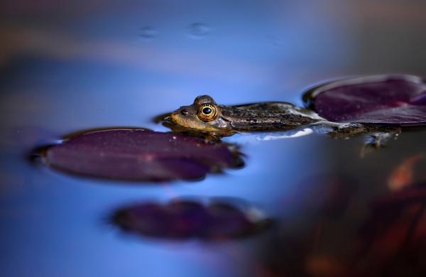 Никитската ботаническа градина – зеленият оазис на Ялта