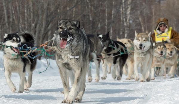 Руски военни усвоили в Арктика пътуване със шейни, теглени от кучета