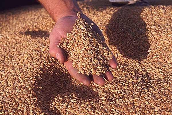 Украйна ще претърпи значителен спад в реколтата заради силовата операция