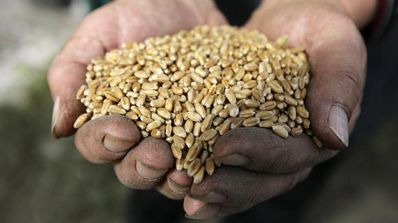 Русия лидира по износ на зърно