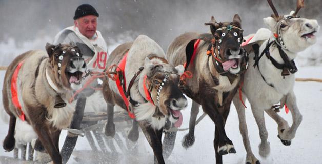 В Мурманск се открива Муждународната Полярна Олимпиада