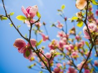 Настъпи астрономическата пролет. Честита пролет!