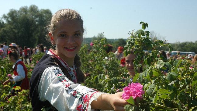 Български рози за парада в Москва
