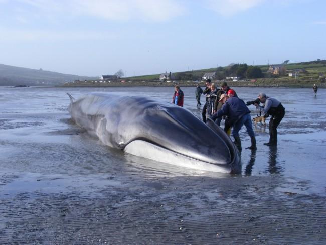 Отговор към Памела Андерсън: Вината е на убийците на китове, а не на търговците,