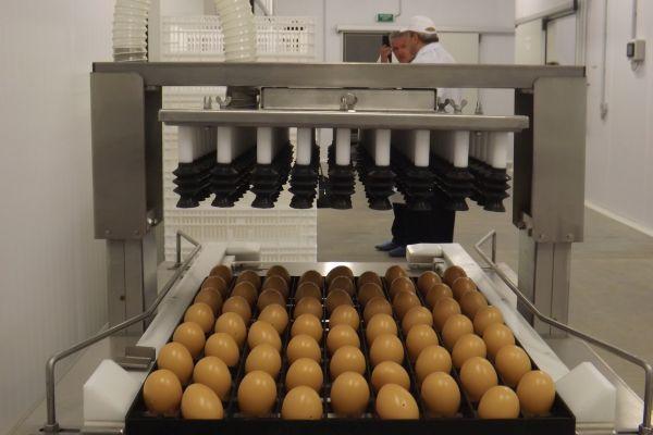 Испанско-руско предприятие за пуешко месо започва производство край Тамбов