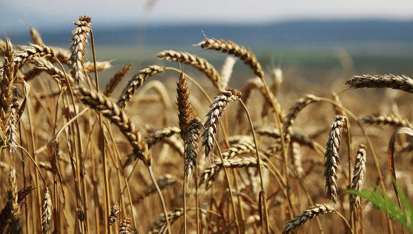 Bloomberg: Русия измества САЩ на зърнения пазар