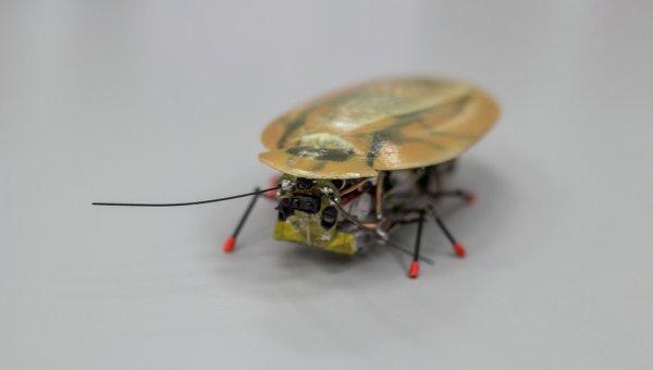 Руски учени създадоха робот-разузнавач, изглеждащ като хлебарка