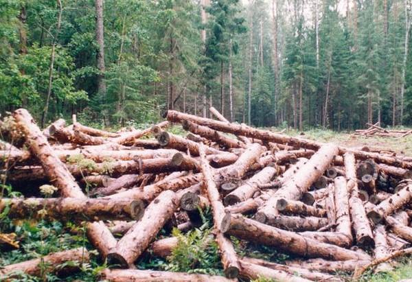 Украинците масово изсичат горите за дърва през зимата