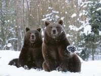 Сибирските градове се управляват от мечки, покрити са във вечен скреж и са спрягани за най-опасните места на света. Реалност или мит? Снимка: Alamy/Legion-Media.