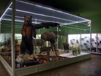 След две години ремонт в Пловдив отвори врати за посетители Природонаучният музей