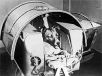 Кучето Лайка е първото животно, което навлиза в орбитата на Замята